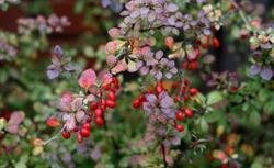Rośliny w ogrodzie jesienią