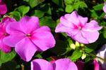 Najlepsze kwiaty i rośliny na balkon - urządzamy ogród na balkonie