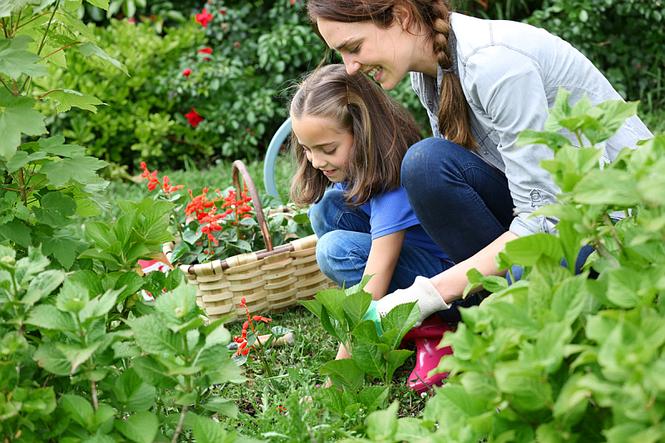 Uprawa roślin - inteligentne podlewanie