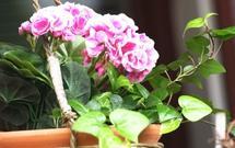 Aranżacja balkonu: kwiaty i meble na balkonie. Jak urządzić balkon, żeby był ładny
