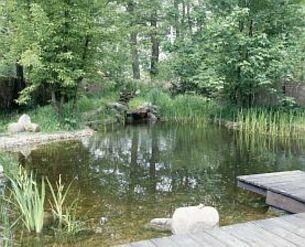 Zielona woda w stawie