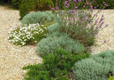 Ze żwiru, kamieni, głazów: nowoczesny ogród w stylu japońskim