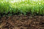 Jak poprawić jakość gleby? Badanie odczynu gleby, nawozy mineralne